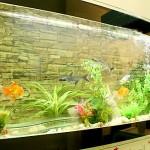 Bể cá trong phòng khách không nên quá to, quá cao